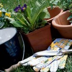 gardening gloves and tools